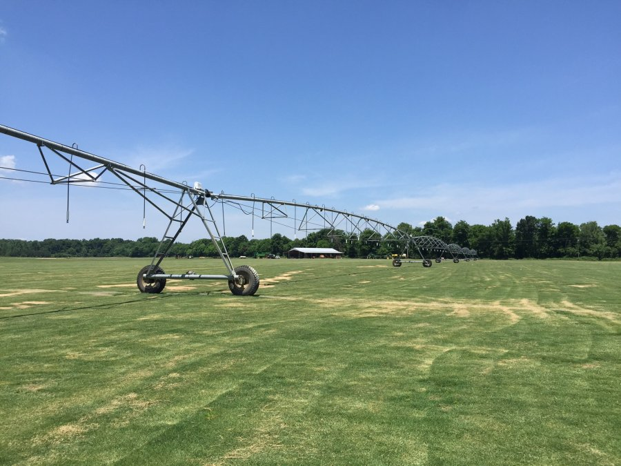 Turfgrass Certification Georgia Crop Improvement Association